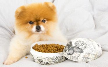 Dry vs. wet food – How to choose the best for your pet