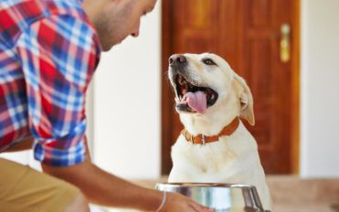 Things You Should Know About The Best Puppy Food In The Market