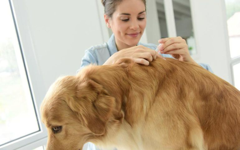 3 effective flea and tick treatments for your dog