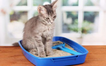 4 effective tips to choose the right cat litter box