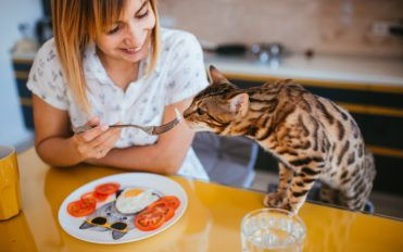5 Popular Cat Foods to Choose From