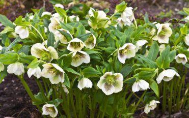 5 winter flowers for fabulous Christmas flower arrangements