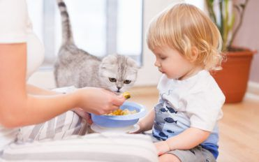 7 Popular Canned Food Choices For Cats