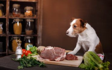A Guide To The Best Premium Dog Food