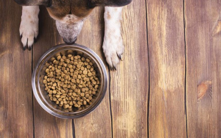 A Guide to Choosing the Best Dog Food
