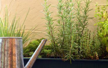 A brief on perennial plants
