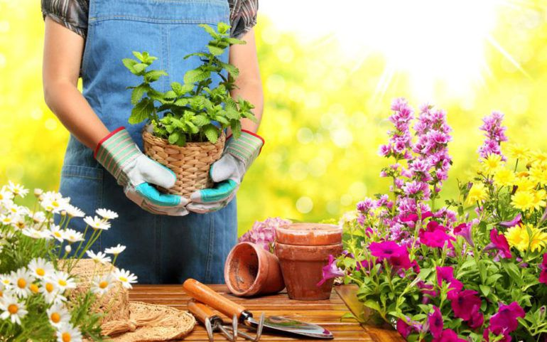 An overview of home-based gardening business