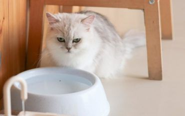 Best vet-recommended foods for your pet cat