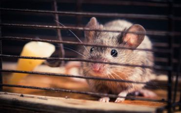 Five questions to ask before you hire a rodent pest control expert