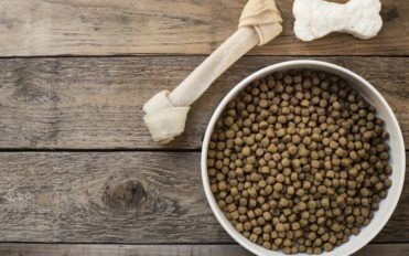 How to Pick the Right Dog Food for a Sensitive Stomach