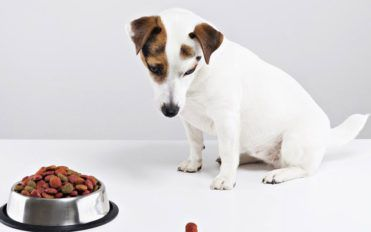 How to develop healthy eating habits for your dog