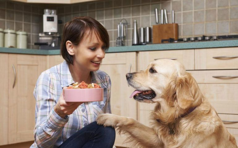Keep your senior dog healthy with these fortified senior dog foods