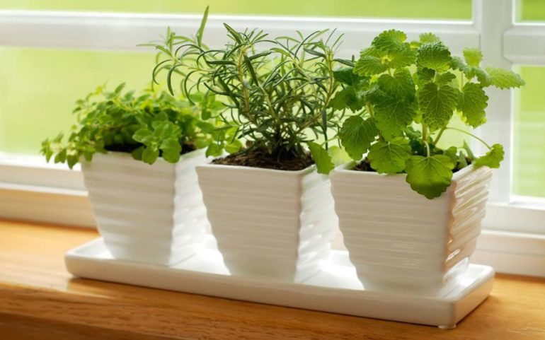 Think indoor gardening when outdoor isn't possible