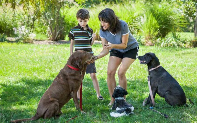 Three Healthy Dog Treats That You Should Know About