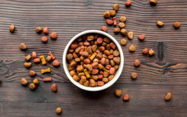 Tips for Buying the Best Dog Food