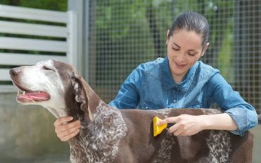 Tips to select the best and affordable pet clinics in the country