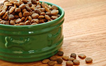 Top 10 pocket friendly dry dog and puppy food