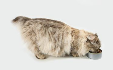 Top 10 wet cat food brands to choose from