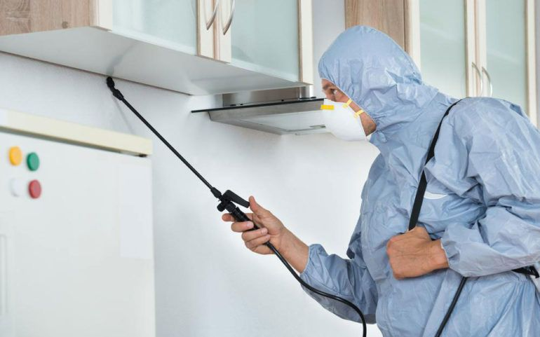 Top 4 local pest control companies