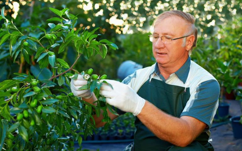 Tree care tips that every passionate gardener should know