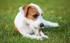3 popular dog DNA test kits that yield accurate results