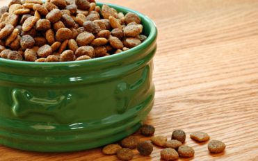 5 best dog foods that are great for your allergic pet