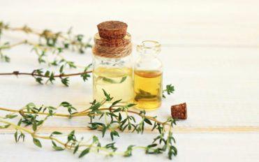 5 of most popular medicinal plants