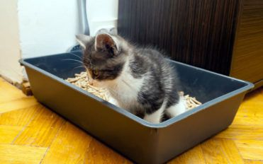 5 tips to choose the correct cat litter