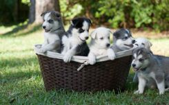 6 Reasons why you should adopt puppies
