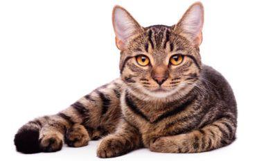 Cat guide 101