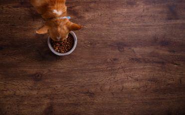 Choosing the Best Dog Food for Allergies