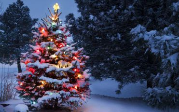 Christmas trees – A holiday tradition for centuries