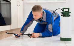 Common DIY home pest control solutions