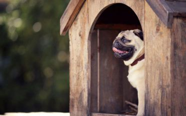 Dog Allergy: An overview