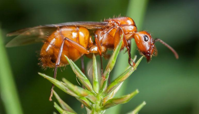 Effective treatments to get rid of fire ants