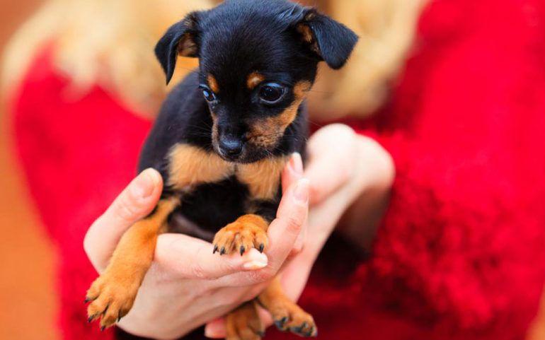 Getting rid of fleas on pets