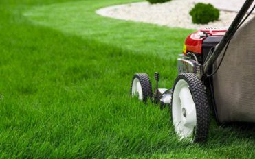 Here's how you can choose the best lawn edger