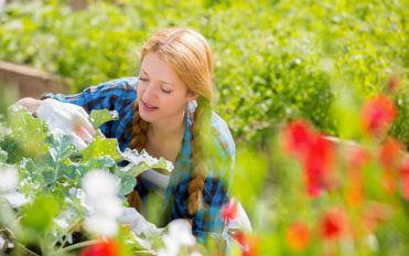 Horticulture: The therapeutic effects of plants