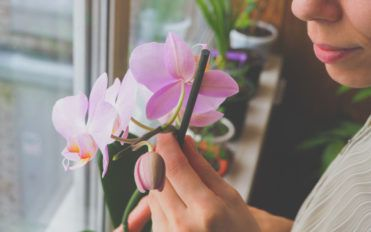 How to care for Orchids indoors