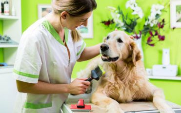 PetSmart grooming coupons for all dog grooming needs