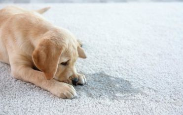 Pet Stain Removal Techniques You Can Try at Home