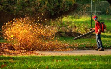 Planning on buying a leaf blower? Here's what you need to know