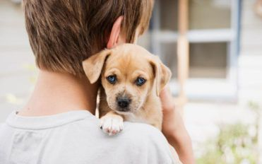Popular dogs and puppies adoption homes in the USA