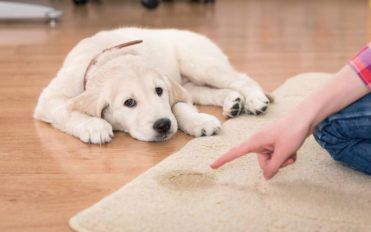 Popular pet urine stain and odor remover products