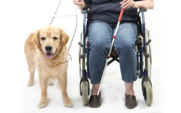 Public access test for getting a service dog certification