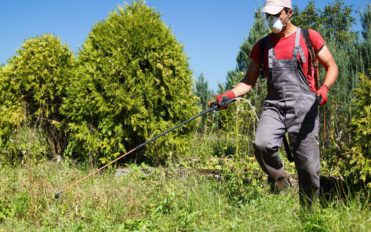 Safety guidelines to follow when removing weeds from the garden