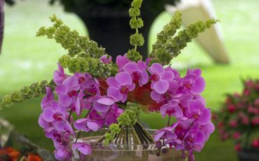 The care your orchids need