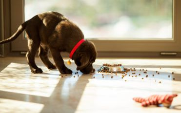 Tips to Choose the Best Puppy Food