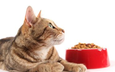 Tips to feed your cat nutritious food using coupons