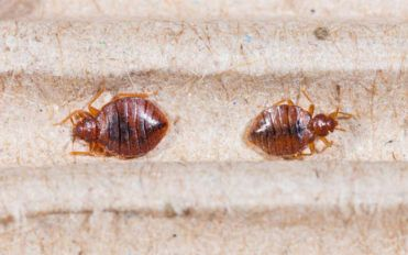 Top 3bed bug sprays you can consider